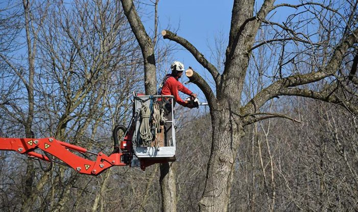 Schlitz Audubon Wisconsin Arborist Association
