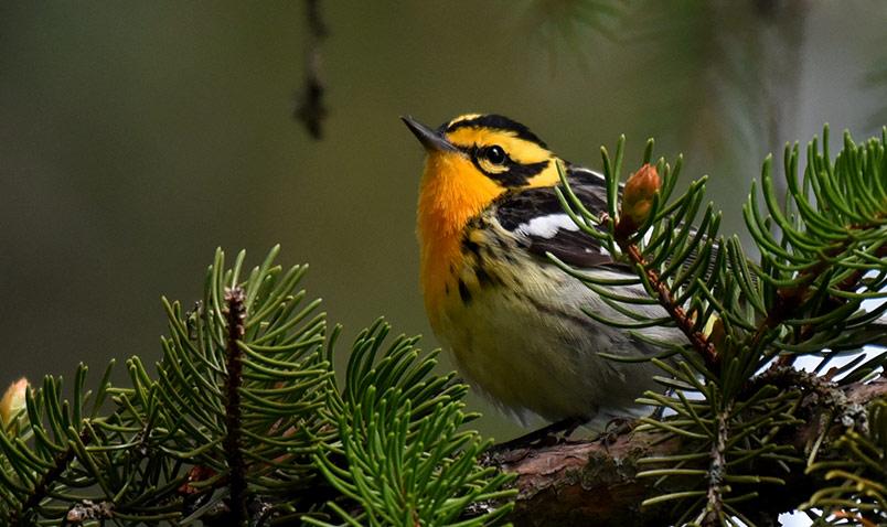 About us Schlitz Audubon